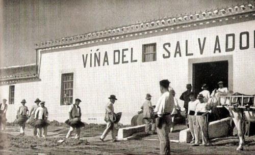 viñasalvador2
